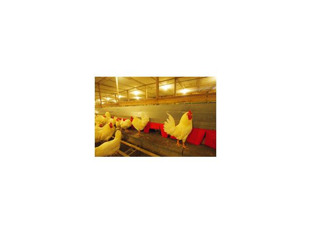 有限会社下田種鶏場のアルバイト情報